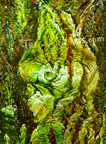 Tree-Art-wall-posters-for-sale