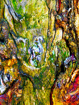 tree-art-prints-on-canvas