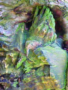 tree art for walls