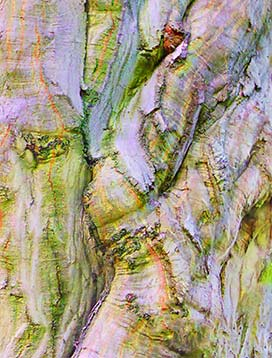trees-art-for-sale