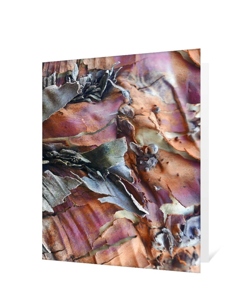 trees greeting cards