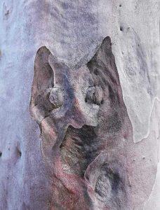 Tree Art Wall Poster Sku#2321738