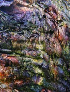 Tree Art Wall Poster Sku#1304322