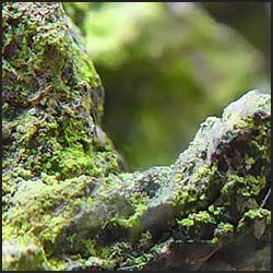tree-photography-macro