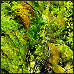 tree-artwork-detail-preview