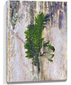 Tree Artwork Sku#128017538