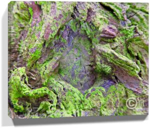 Tree Wall Artwork Canvas Sku#1322472