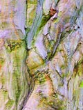 tree-bark-art