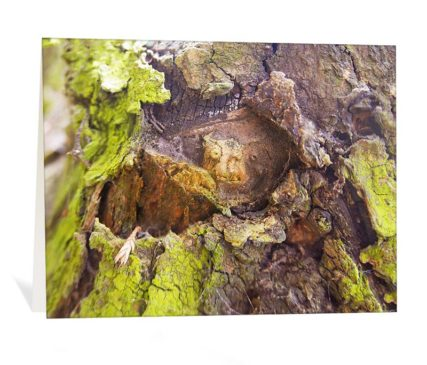 trees art greeting card