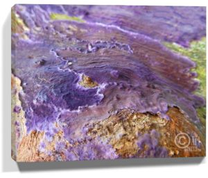 Tree Wall Artwork Canvas Sku#2543386