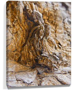 Tree Artwork Wall Canvas Sku#5352218