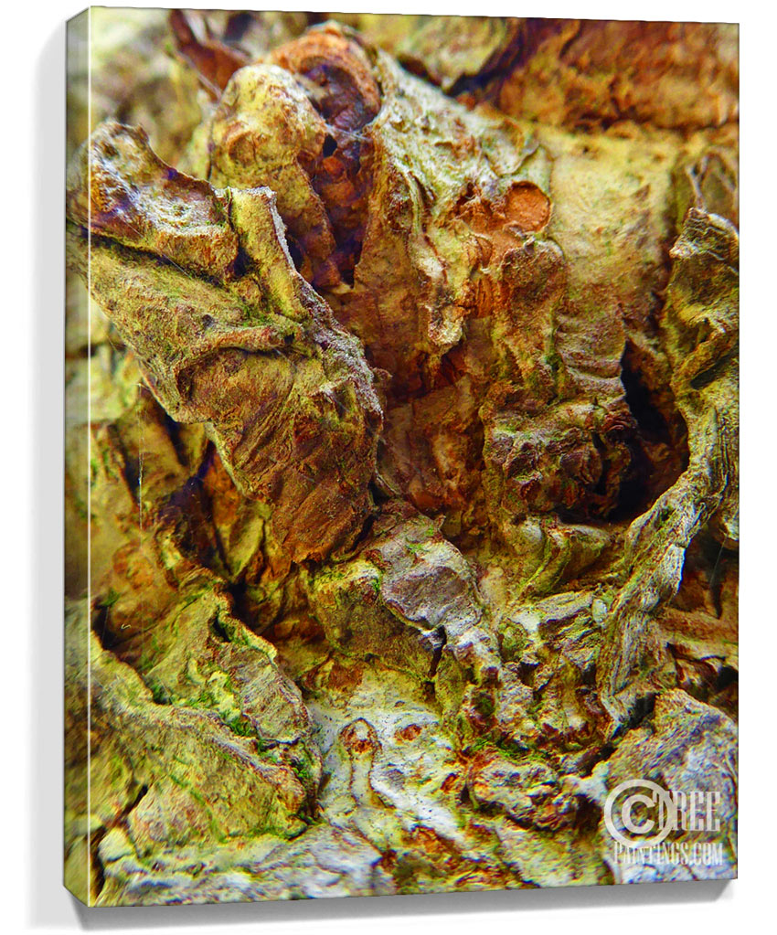 Real tree artwork trees art for sale sku 10105 for Real art for sale