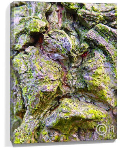 buy tree art online