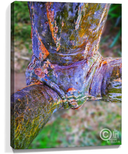 tree art prints for sale