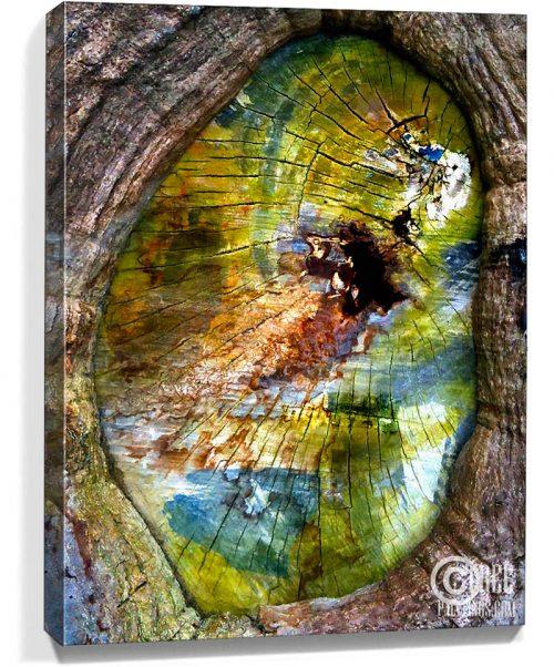 Trees artwork for sale