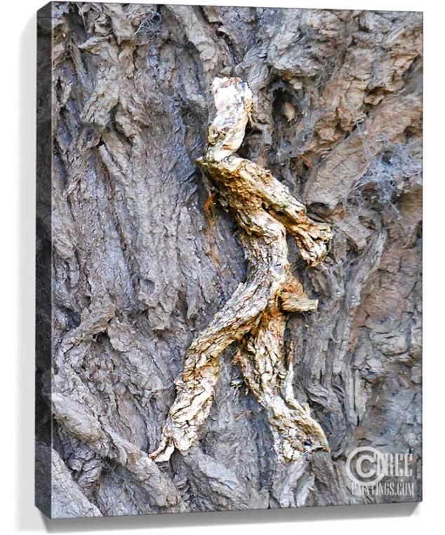 trees art prints