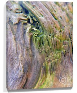 Tree Art Wall Canvas Sku#1280755