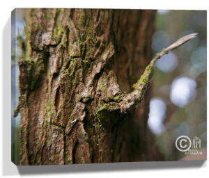Tree Wall Artwork Canvas Sku#2273235