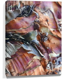 Tree Art Wall Canvas Sku#2273242