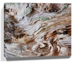 Tree Wall Artwork Canvas Sku#3226846