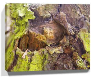 Tree Wall Artwork Canvas Sku#3582253