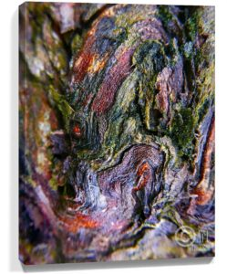 Tree Art Wall Canvas Sku#2187482