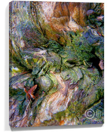 Trees wall art decor